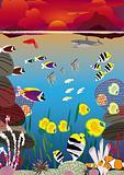 sunset swimming fish