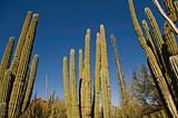 Towers of Cactus