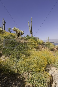 Cactus on the Hillside