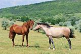 two friendly horses