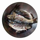 Fresh Fish in a Sieve
