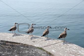 4 Seagulls