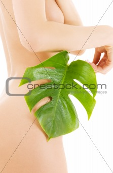 female torso with green leaf over white
