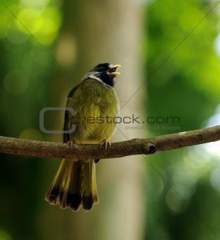Small bird