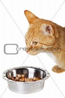 small cat and feeding dish isolated on white