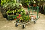 Nursery Plants For Sale