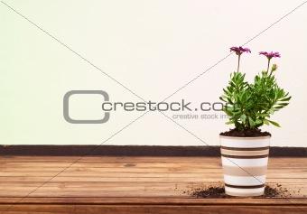 Beautiful Purple Flower in Striped Ceramic Pot