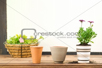 Three Flower Pots in a Row