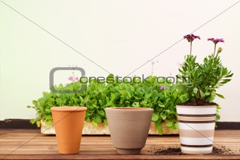 Three Clay Flower Pots in a Row