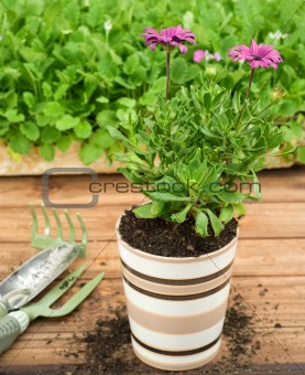 Single Striped Ceramic Flower Pot