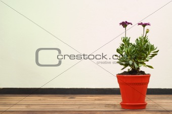 Beautiful Purple Flower in Red Pot