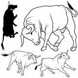 Bull Set
