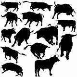 Bull Set Silhouettes
