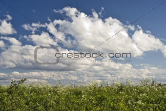 Beautiful sky and feral flowers background