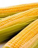 Three corns isolated on white