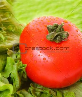 Tomato on green background