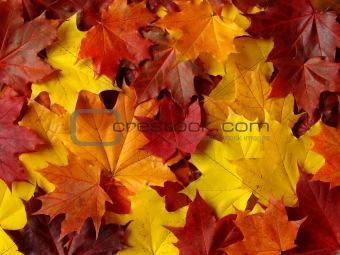 autumnal palette