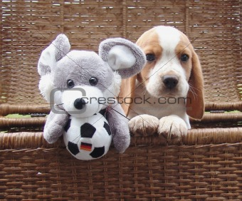 Beagle puppy with toy mouse