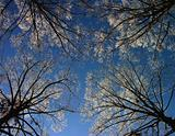 winter tree &amp; blue sky