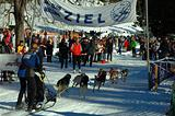 Musher race action to finish