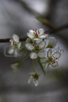 Blooms & spring