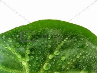 Green leaf half