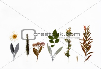 Flowers, Herbs and Plants of Autumn