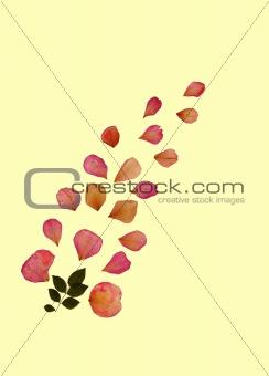 Faded Rose Petals
