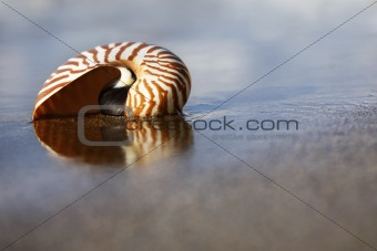 Beach Nautilus