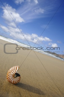 Beach Nautilus