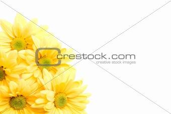 yellow daisies corner