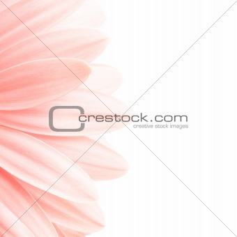 pink petals highkey
