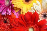 Colorful Flower Closeup