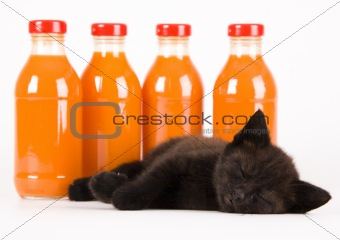 Cat & Orange drink