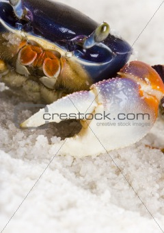 The crab on the sand