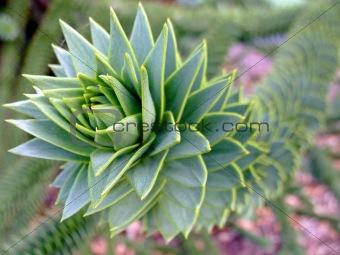 Green liana