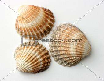 Three exotic shells