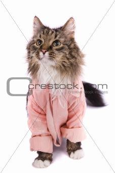 Cat clothed pink bathrobe