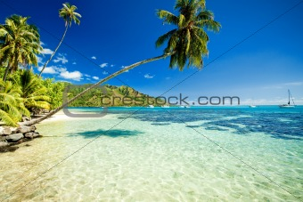 Palm tree hanging over stunning lagoon