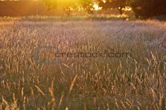 summer glow grassland
