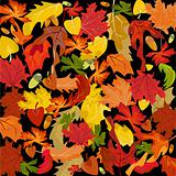 Autumn leaves, vector background