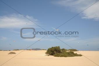 Kites at the Flagbeach in Corralejo, Canary Island Fuerteventura, Spain