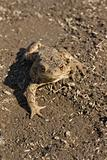 toad on earth