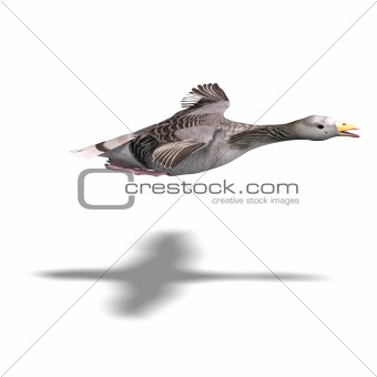 grey goose in flight