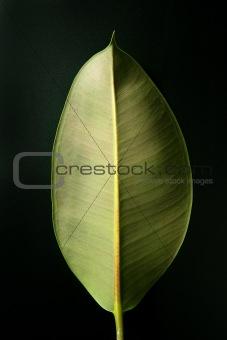Autumn leaf over dark background and shadows