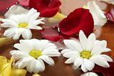 Rose petals and daisy flower on water spa