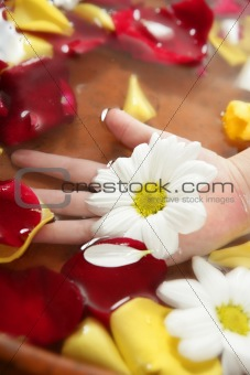 Aromatherapy, flowers hand bath, rose petal