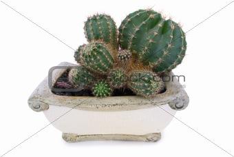 Cactus in stone pot.