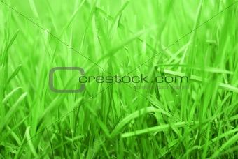 Rich Grass