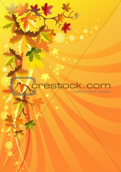 Autumn foliage on a solar background
